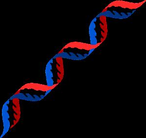 dna & genes